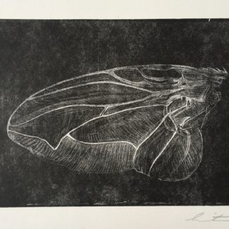Hand Original Relief Printed Fly Wing Copperplate