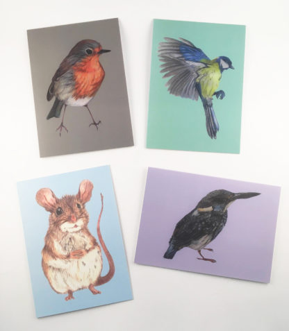 Quints Prints Card Selection Robin Birt Blie Tit Mouse Kingfisher Animals