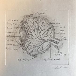 Copperplate Etching Original Print Eyeball Labelled